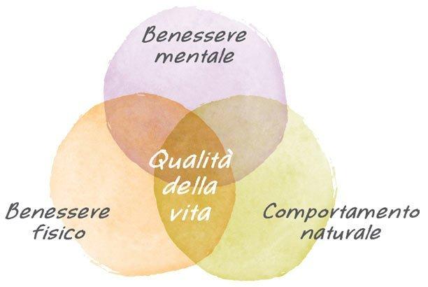 Benessere animale, sostenibilità aziendale - Fattorie Osella
