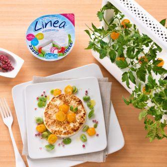 Linea Osella scottata con pomodorini gialli e favette