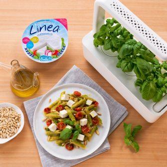Pasta al pesto con Linea Osella e basilico fresco